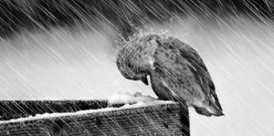 depressionbird